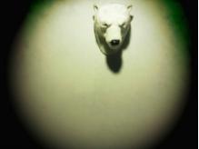 白壁にヒッソリと、熊男くん