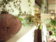 植物も元気に成長中!リラックスできますよ♪